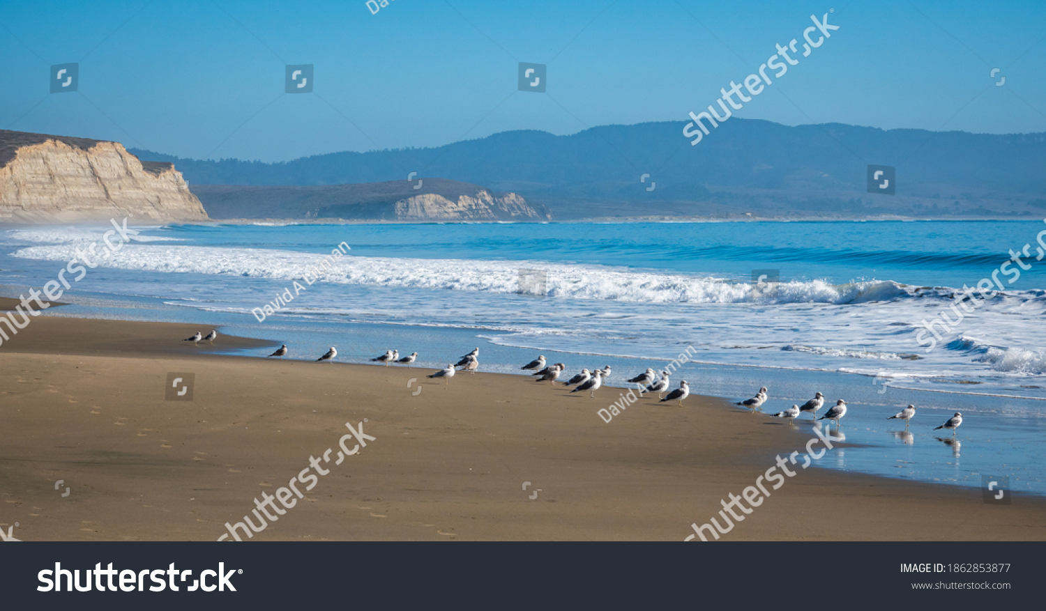 A flock of seagulls stand on the Pacific Coast shoreline of Drakes Beach, at the Point Reyes National Seashore, in Northern California.
