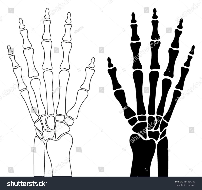 Human Hand Bones Stock Vector 186464309 - Shutterstock