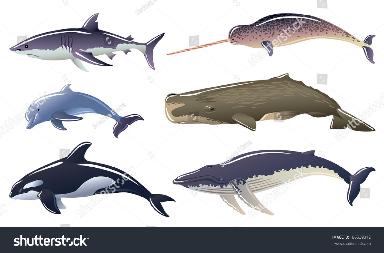 Marine mammals pictures - photo#23