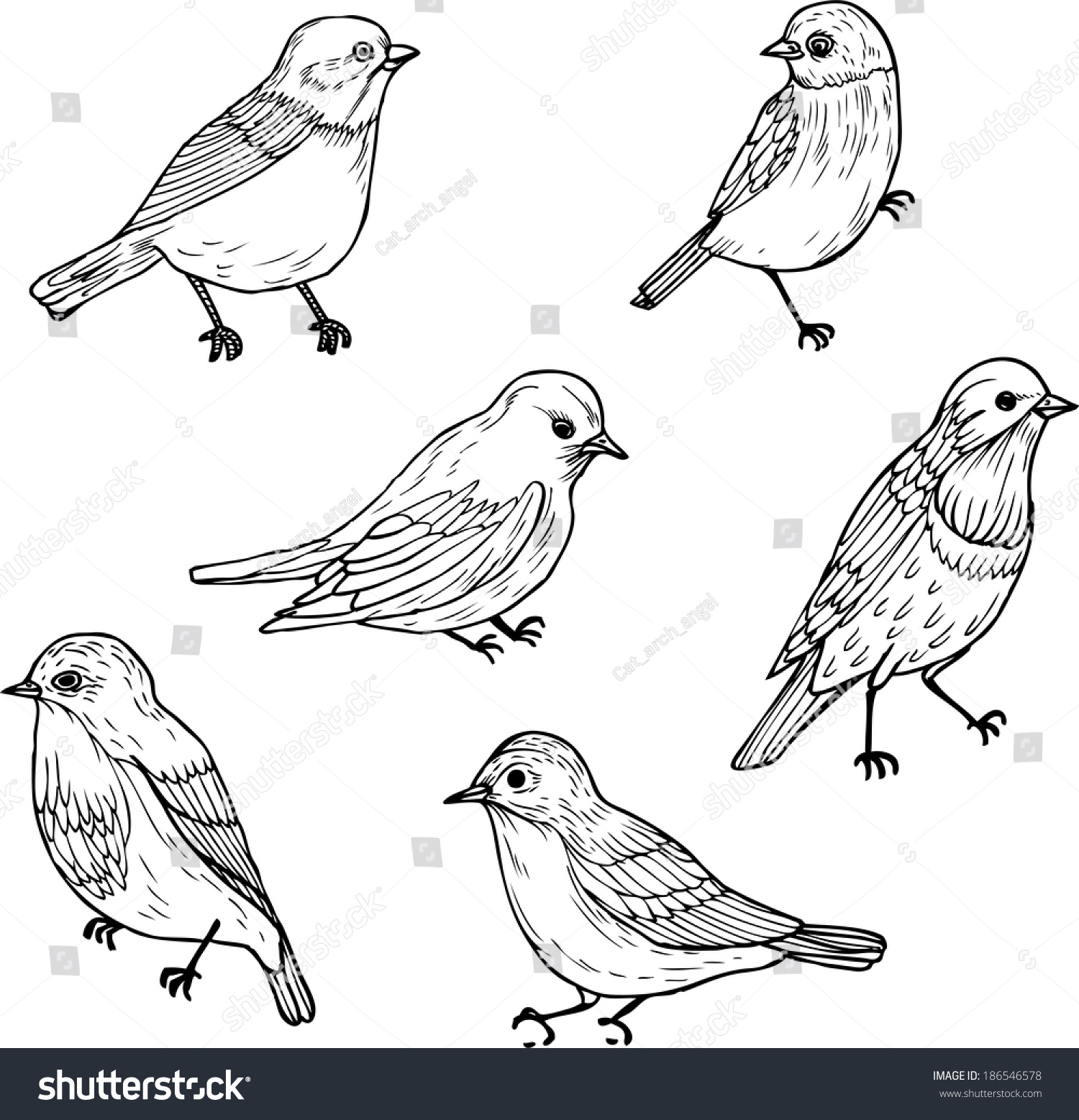 Line Art Birds : Set line drawings birds ink drawing stock vector