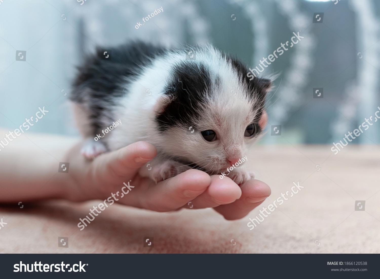 stock-photo-black-and-white-newborn-kitt