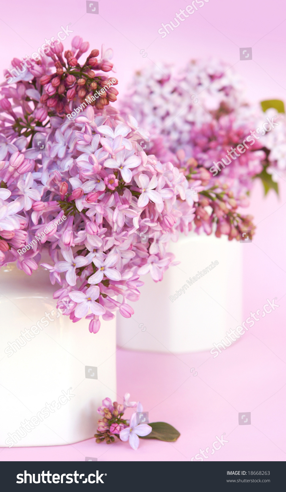 Gorgeous lilac blooms small white vases stock photo 18668263 gorgeous lilac blooms in small white vases soft focus with focus on front flowers reviewsmspy