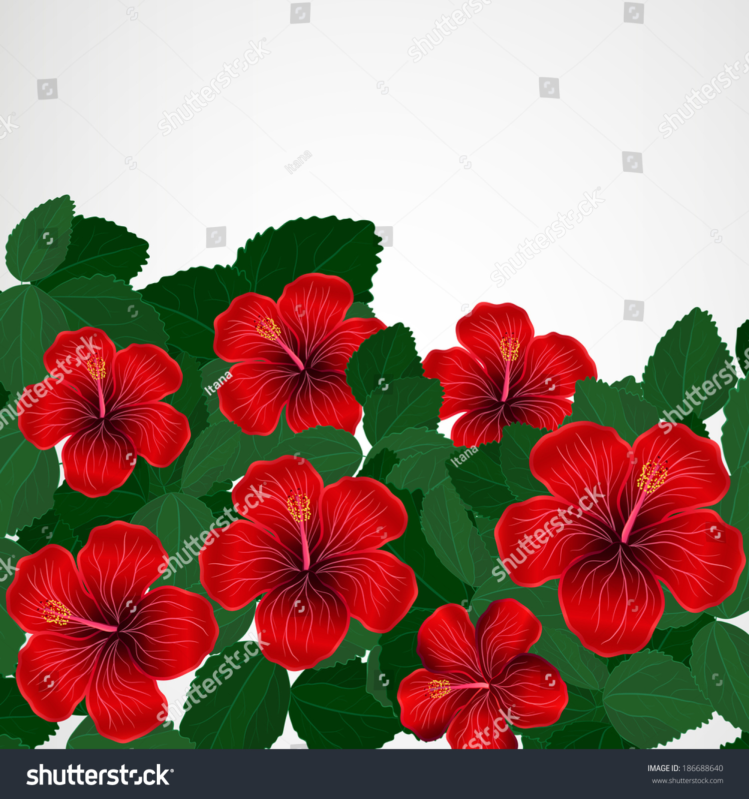 Floral Design Background Hibiscus Flowers Ez Canvas