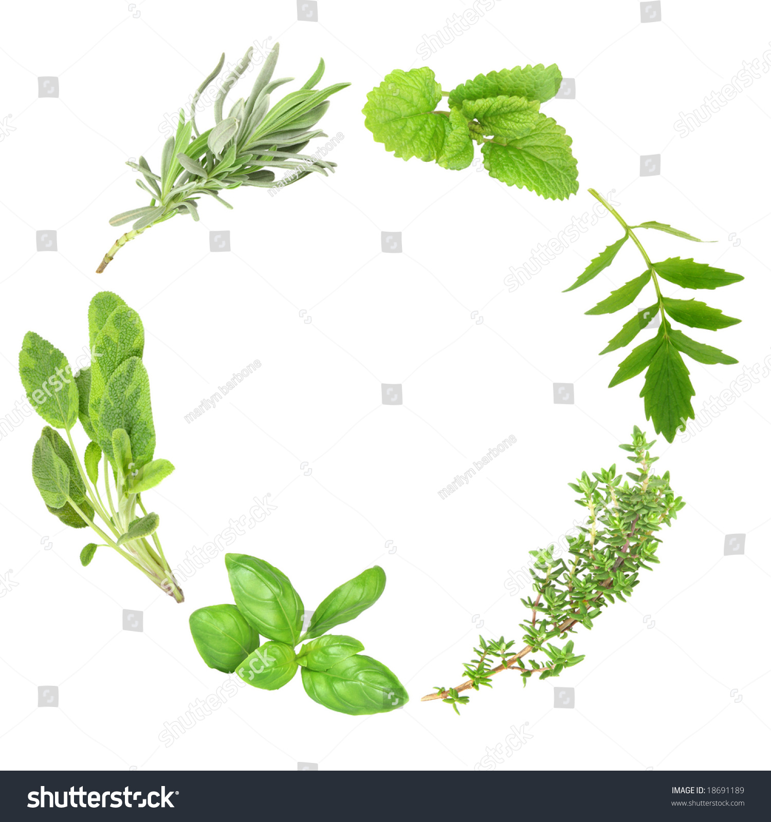 Herb Leaf Garland Basil Variegated Sage Stock Photo Edit Now