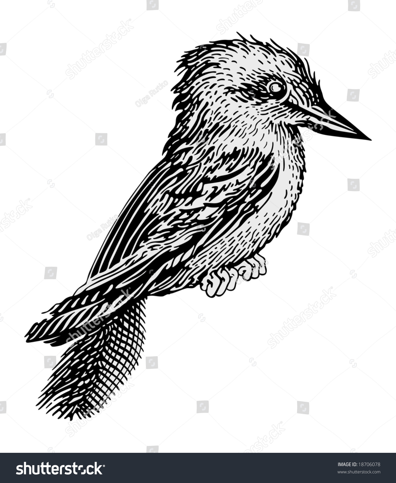 Line Drawing Kingfisher : Kingfisher vector stock shutterstock