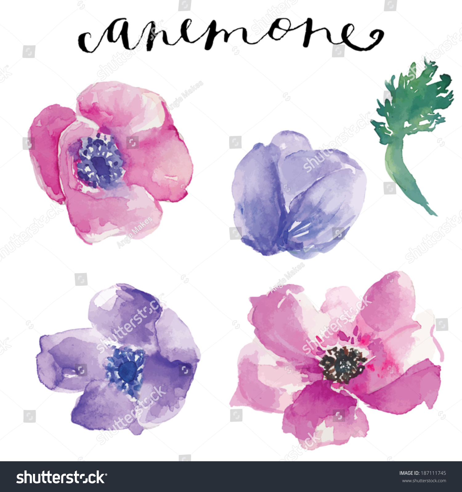 Watercolor Vector Flowers Watercolor Anemone Flowers Stock Vector ...