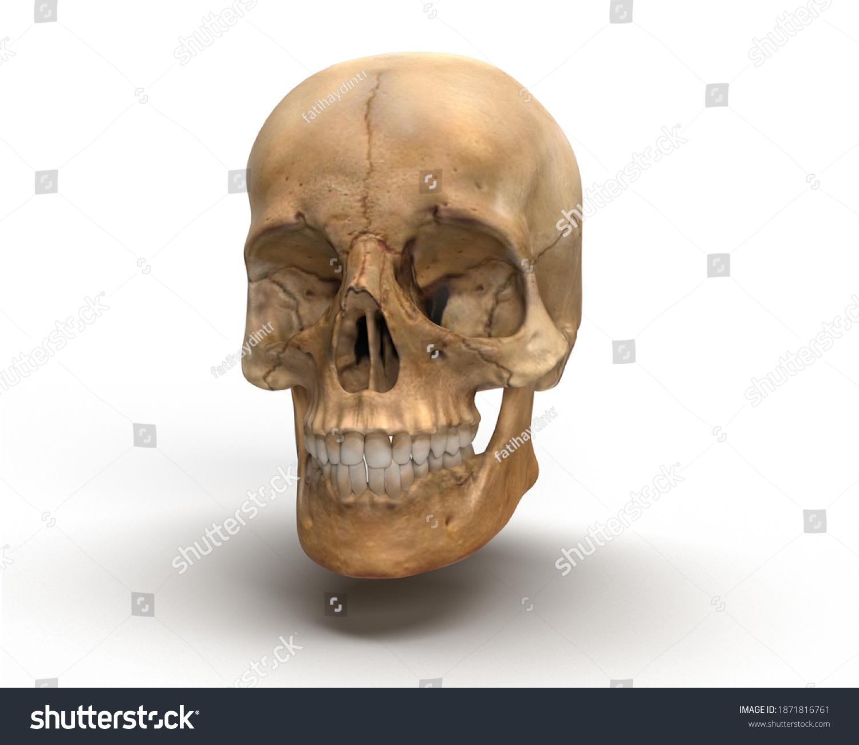 stock-photo--d-render-brown-skull-front-