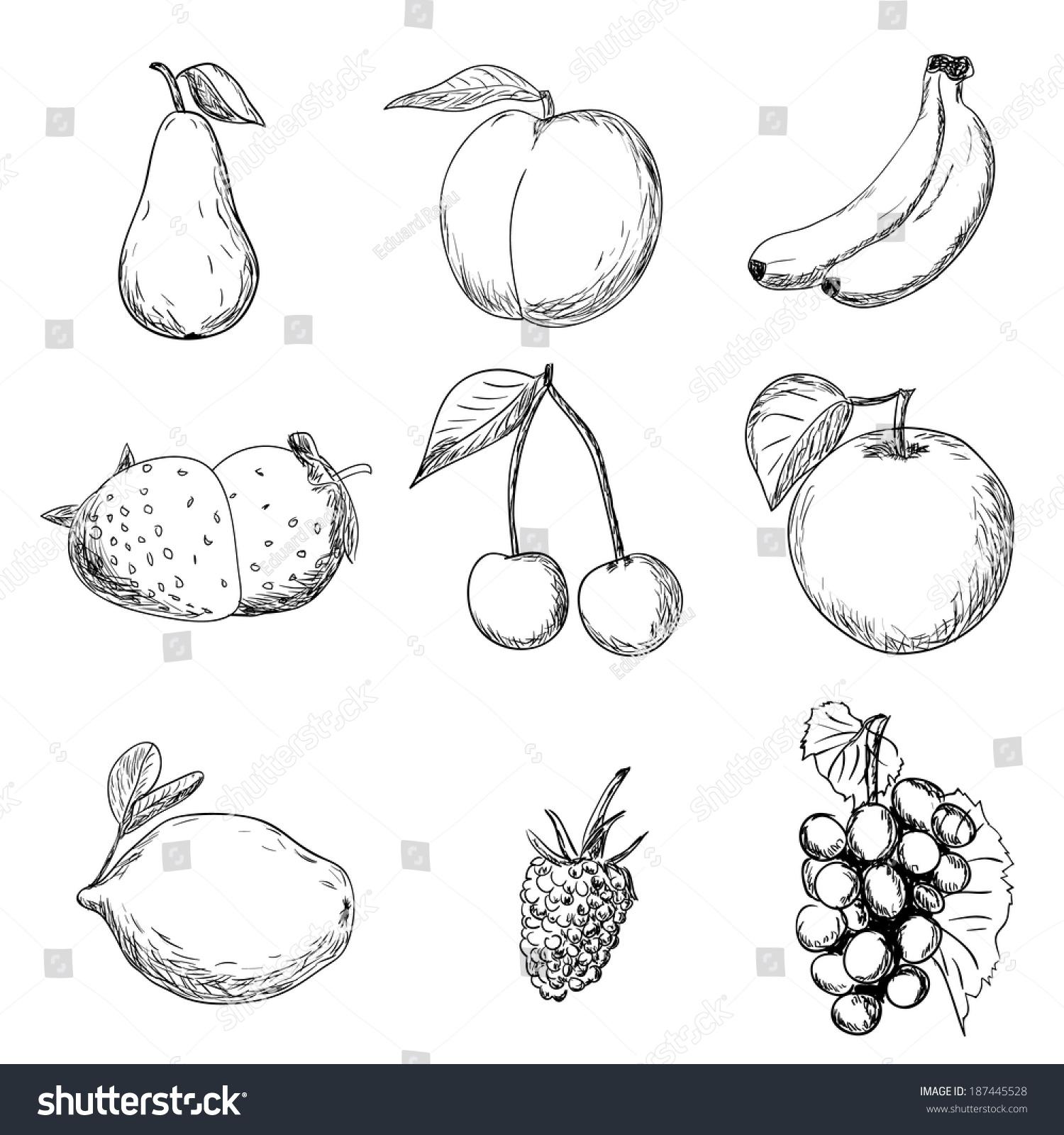 fruits drawing 187445528