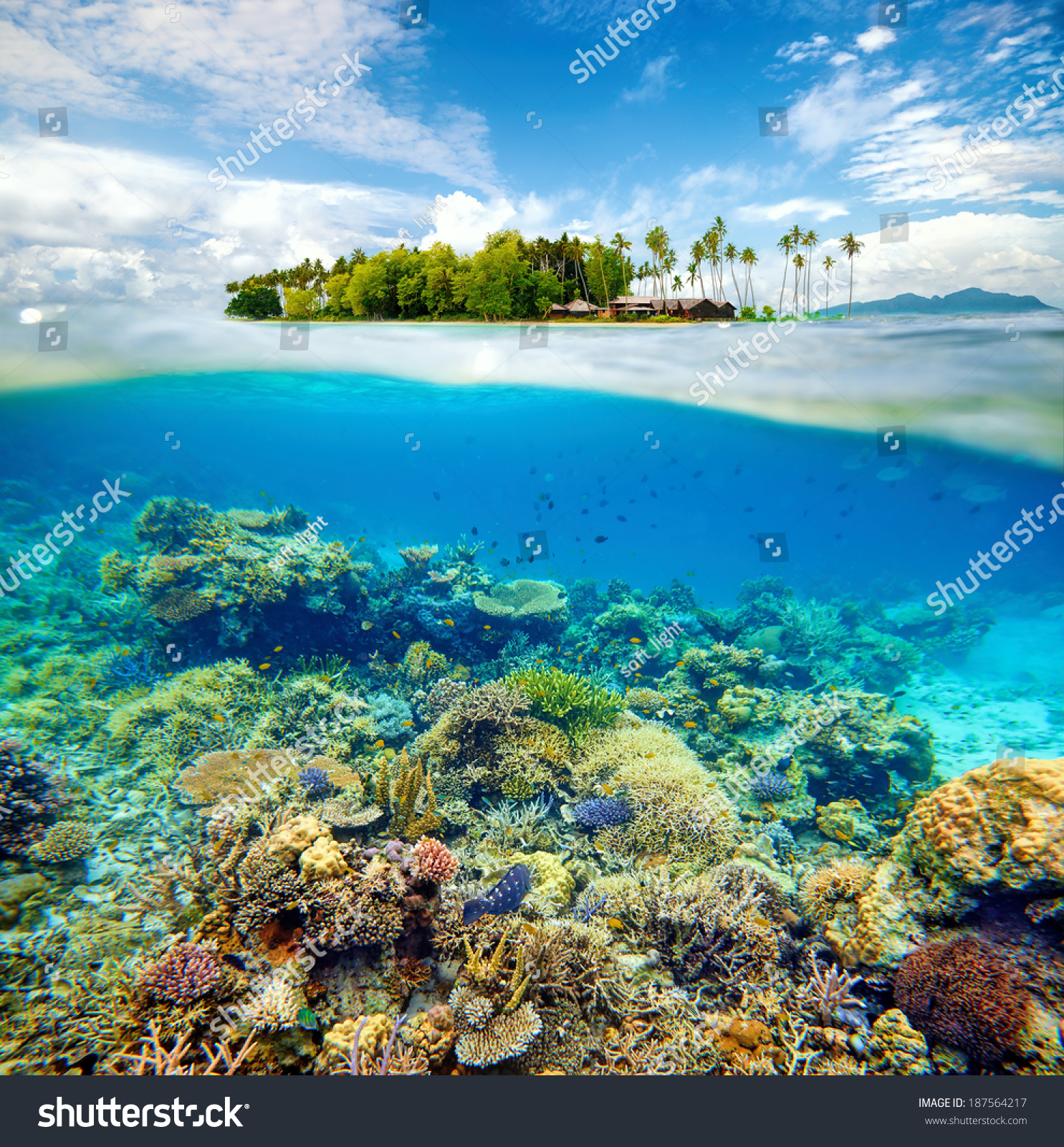 Coral Reef Background: Beautiful Coral Reef Fish On Background Stock Photo