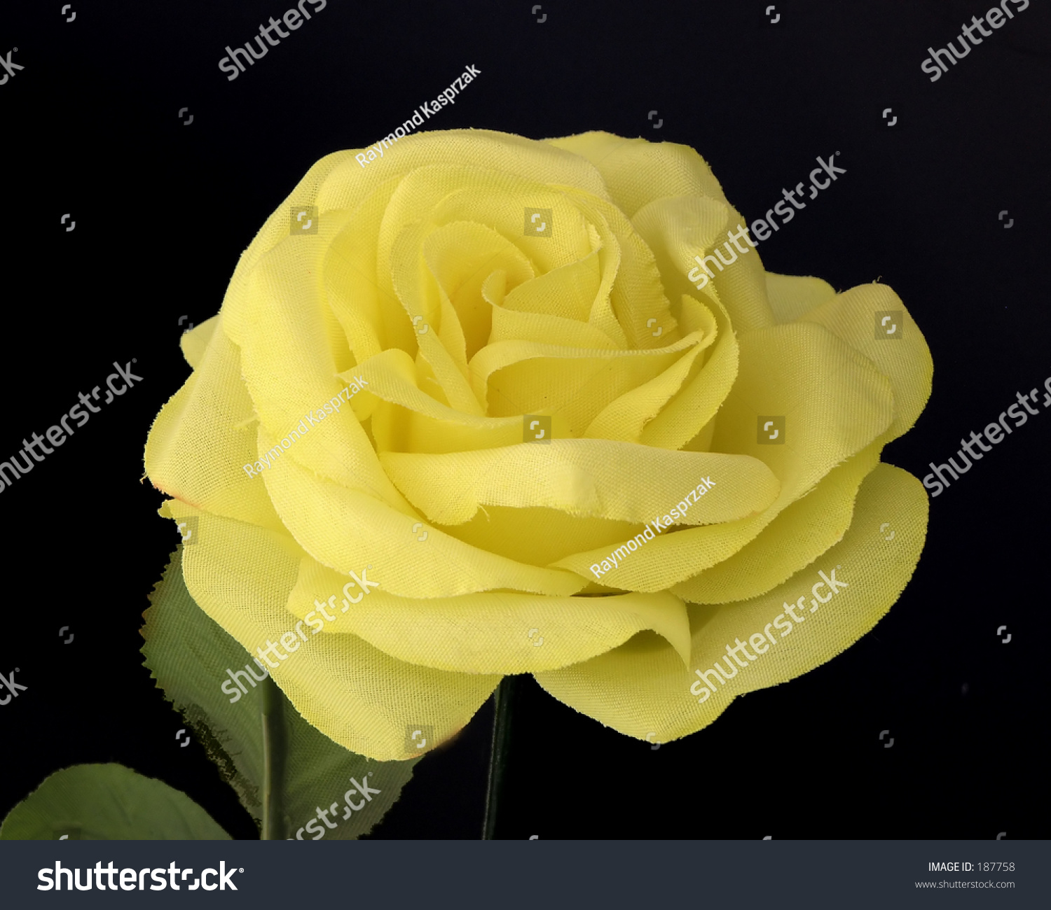 rosebush black singles Meet singles over 50 in mount pleasant are you searching for a someone single over 50 to commit your attention to or are you just trying to find a new friend to go watch a ball game with at the park or local pub tomorrow.