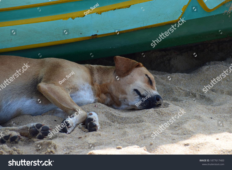 stock-photo-homeless-dog-sleep-in-the-be