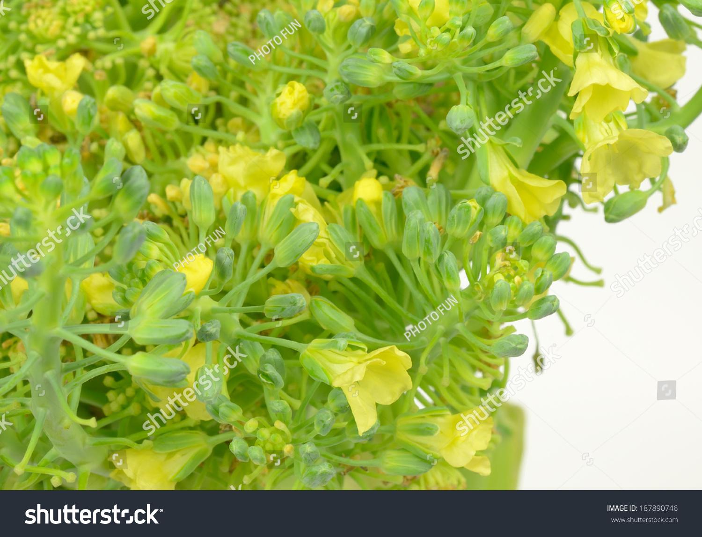 Broccoli Flowers Stock Photo Edit Now 187890746 Shutterstock