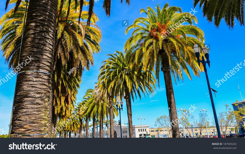Datování palm beach