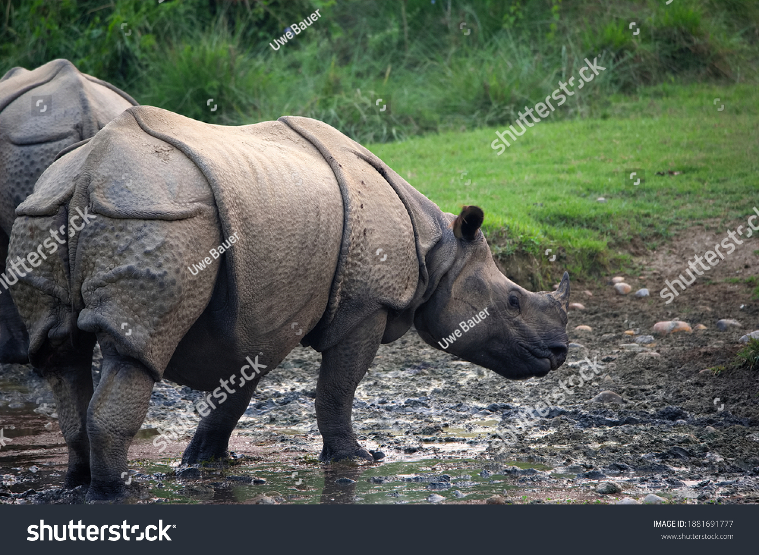 stock-photo-indian-rhinoceros-in-the-eve