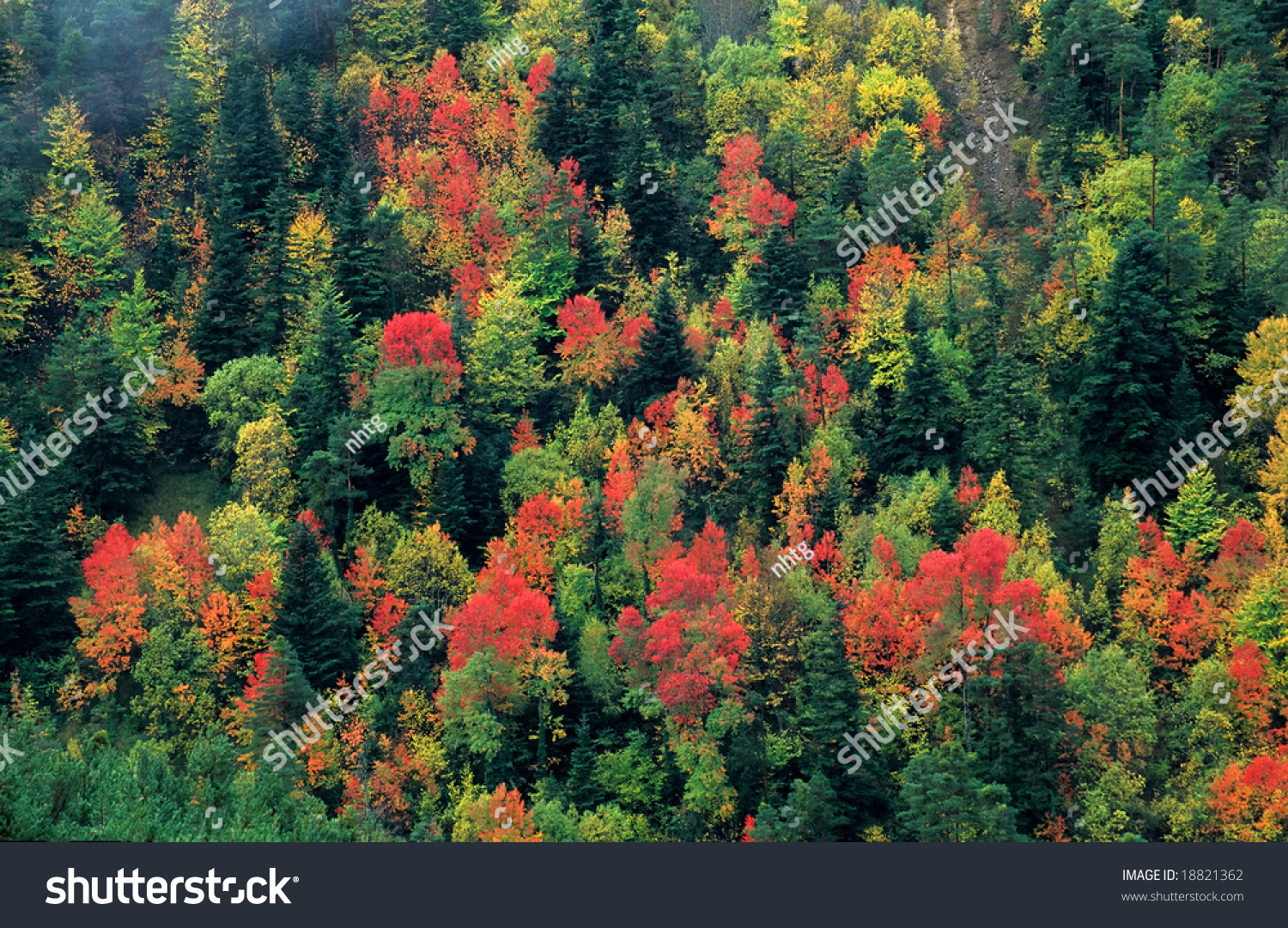 View Beautiful Forest Showing Different Colored Stock Photo (Royalty ...