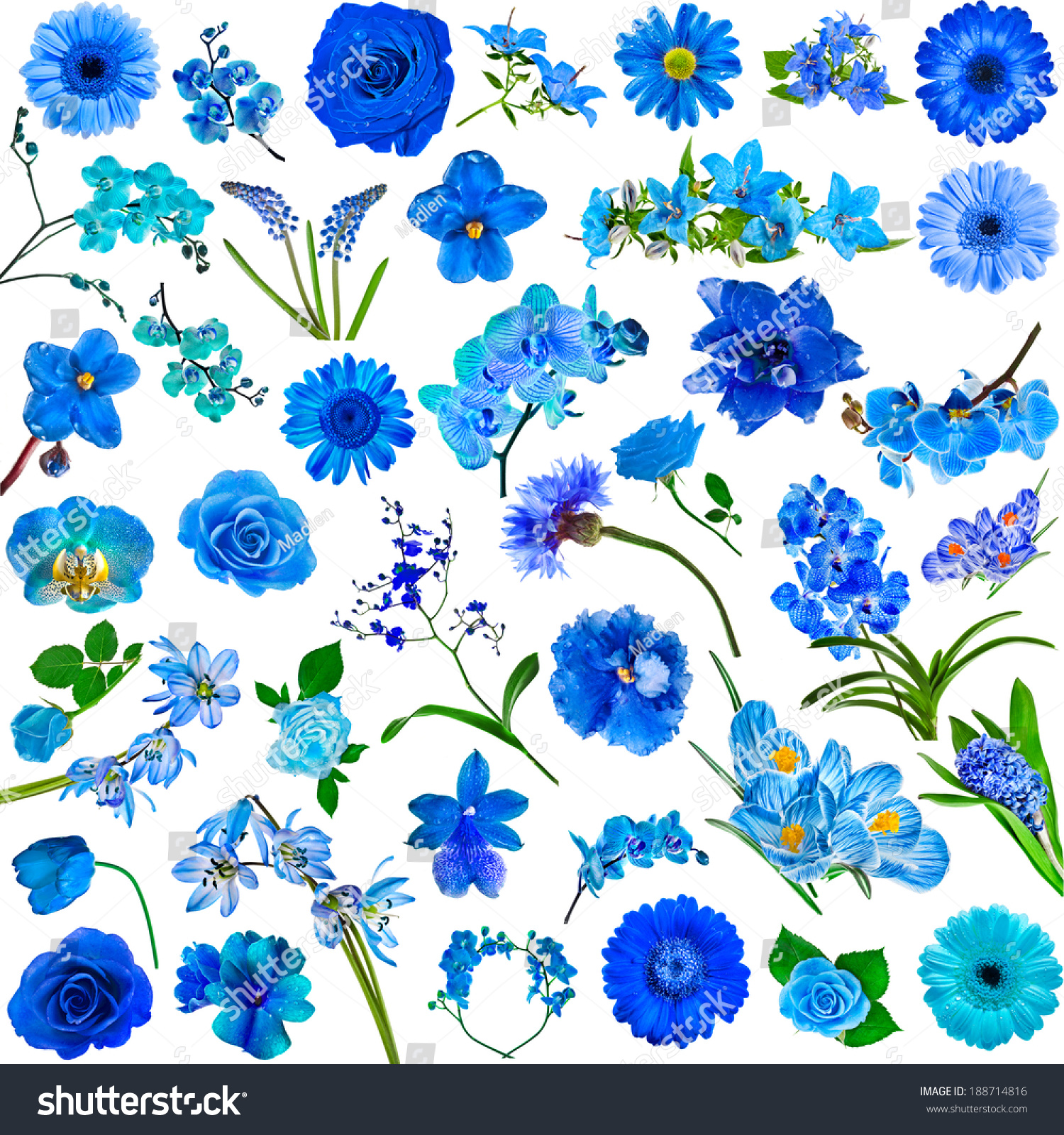 Collection Set Blue Flowers Isolated On Stock Photo 188714816 ...