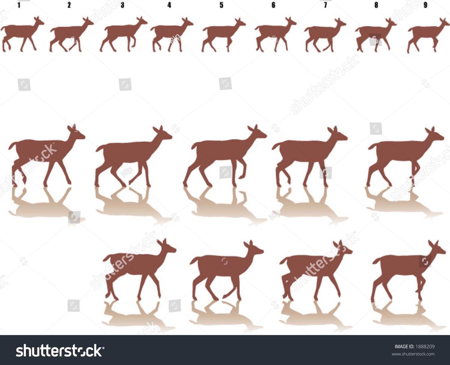 Frame By Frame Walking Deer Stock Photo (Photo, Vector, Illustration ...