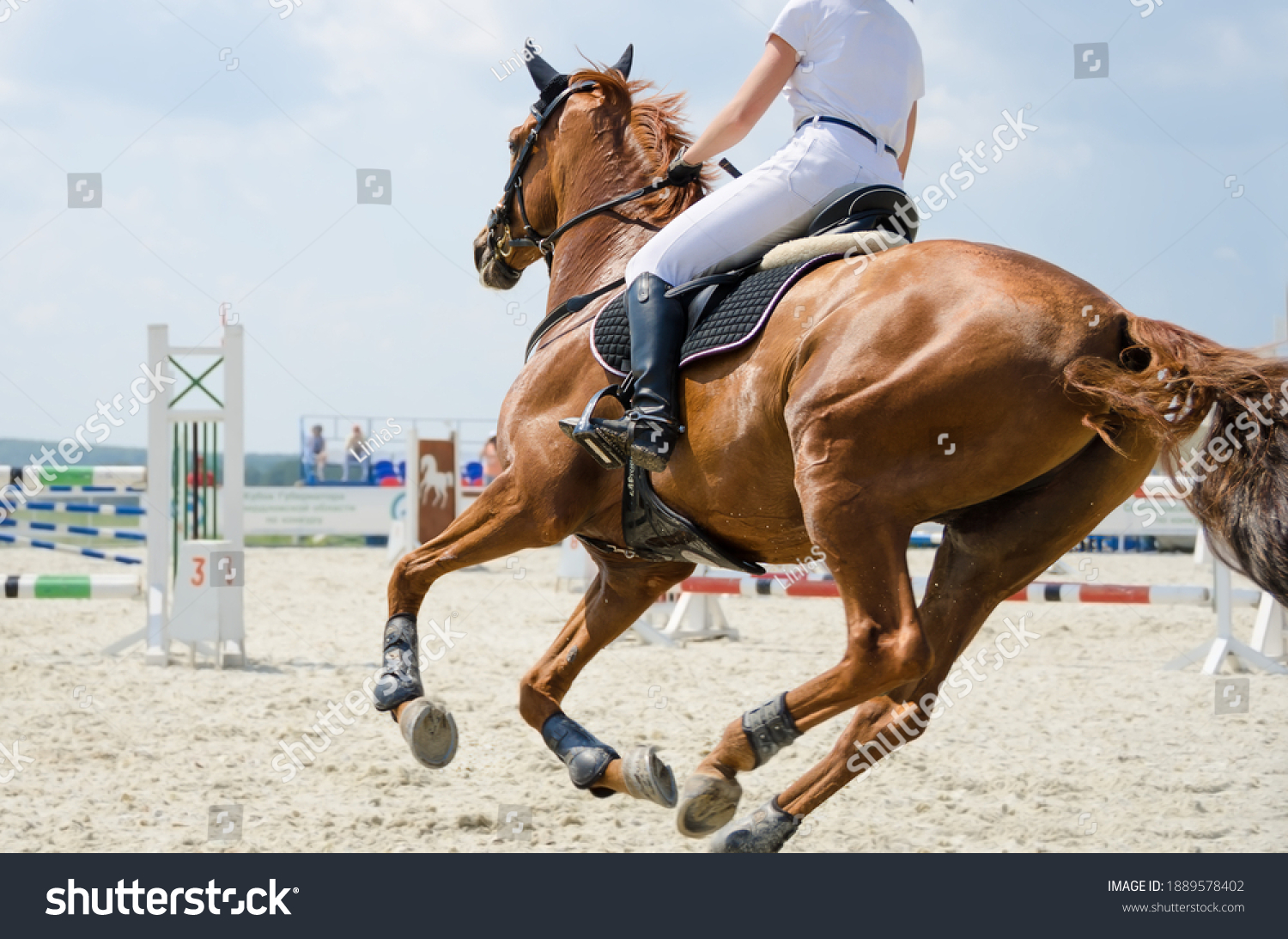 Red sports horse moving at a gallop on the outdoor equestrian show jumping competitions at the summer #1889578402