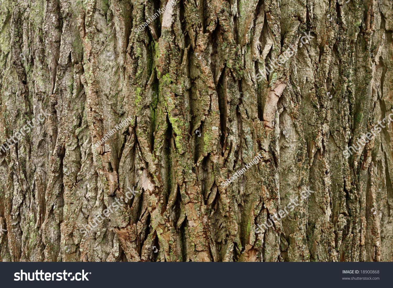 evergreen tree bark background - photo #16