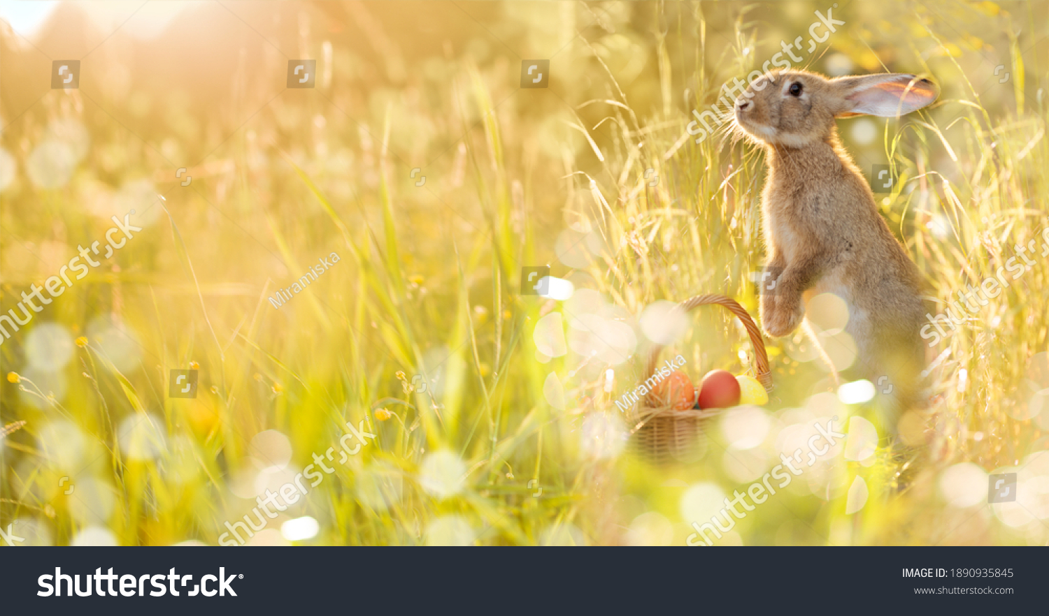 Easter bunny with a basket of eggs. Happy Easter Bunny on a card on their hind legs with flowers at sunset. Cute hare #1890935845
