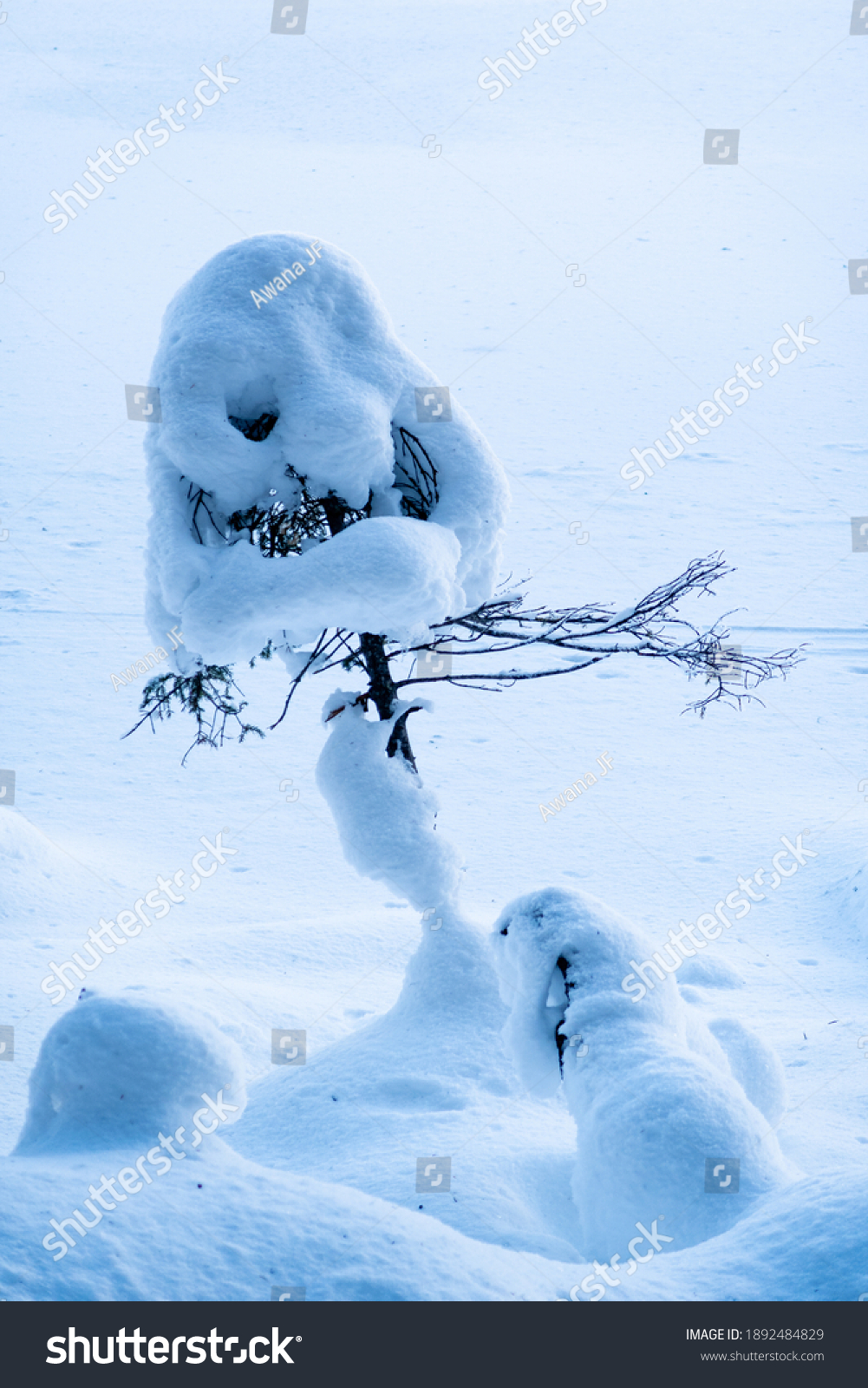 stock-photo-snow-on-a-small-tree-looking