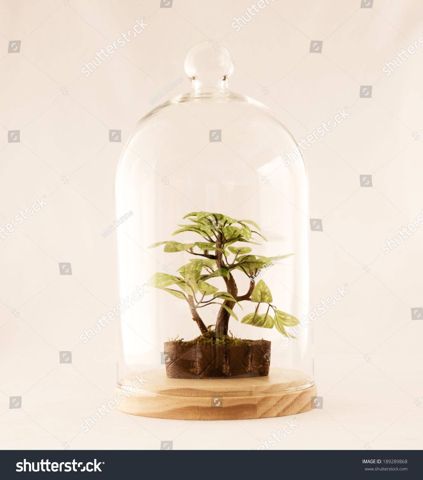 Bonsai Terrarium Stock Photo Edit Now 189289868