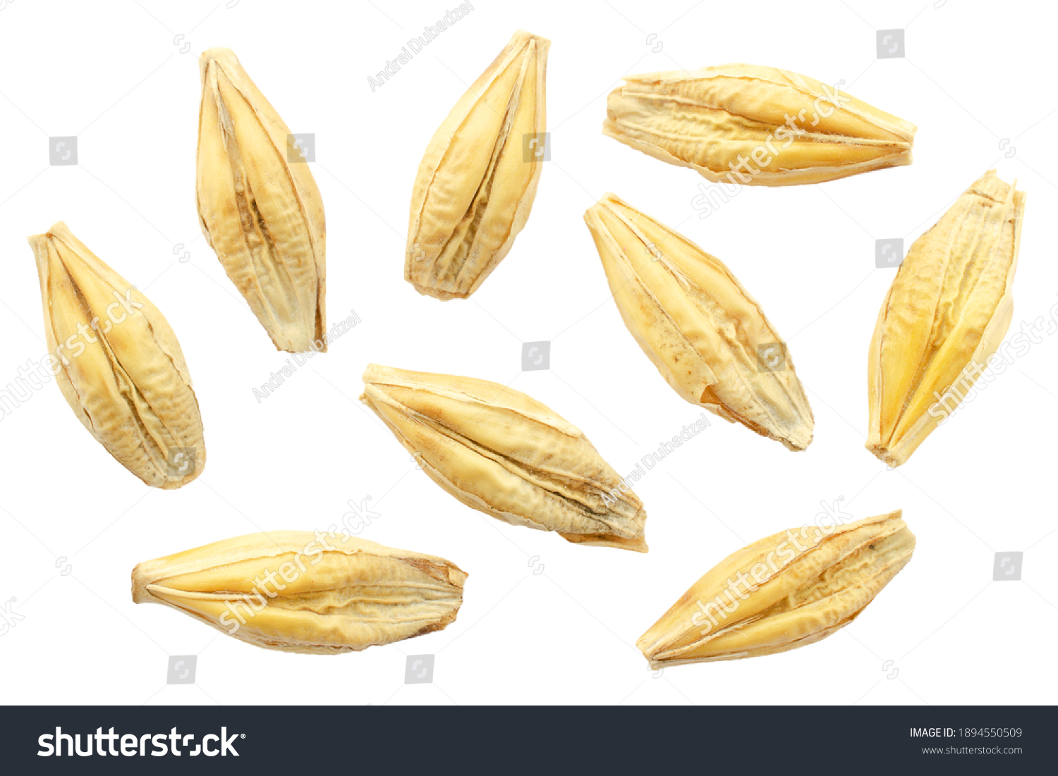 Barley seeds are isolated on white, top view, macro. Barley seeds isolated on a white background. Grains of barley malt on a white background. Set of barley grains isolated on white background. #1894550509