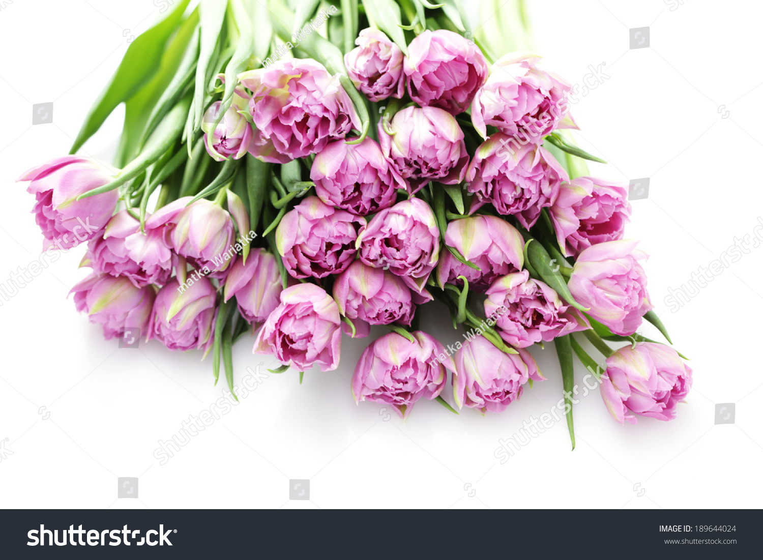 Lovely Pink Tulips Flowers And Plants Ez Canvas