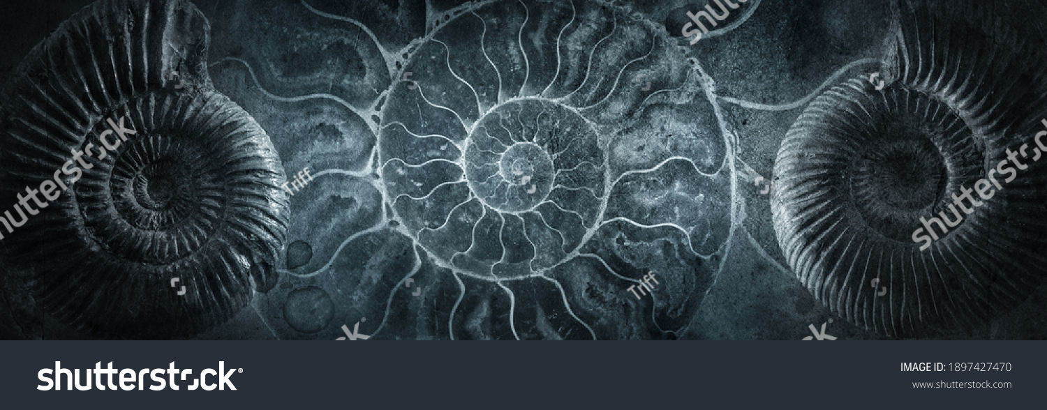 Ammonite shell on an ancient background. Concept on the topic of science, history, paleontology, archeology, geology. History of the Earth background. #1897427470