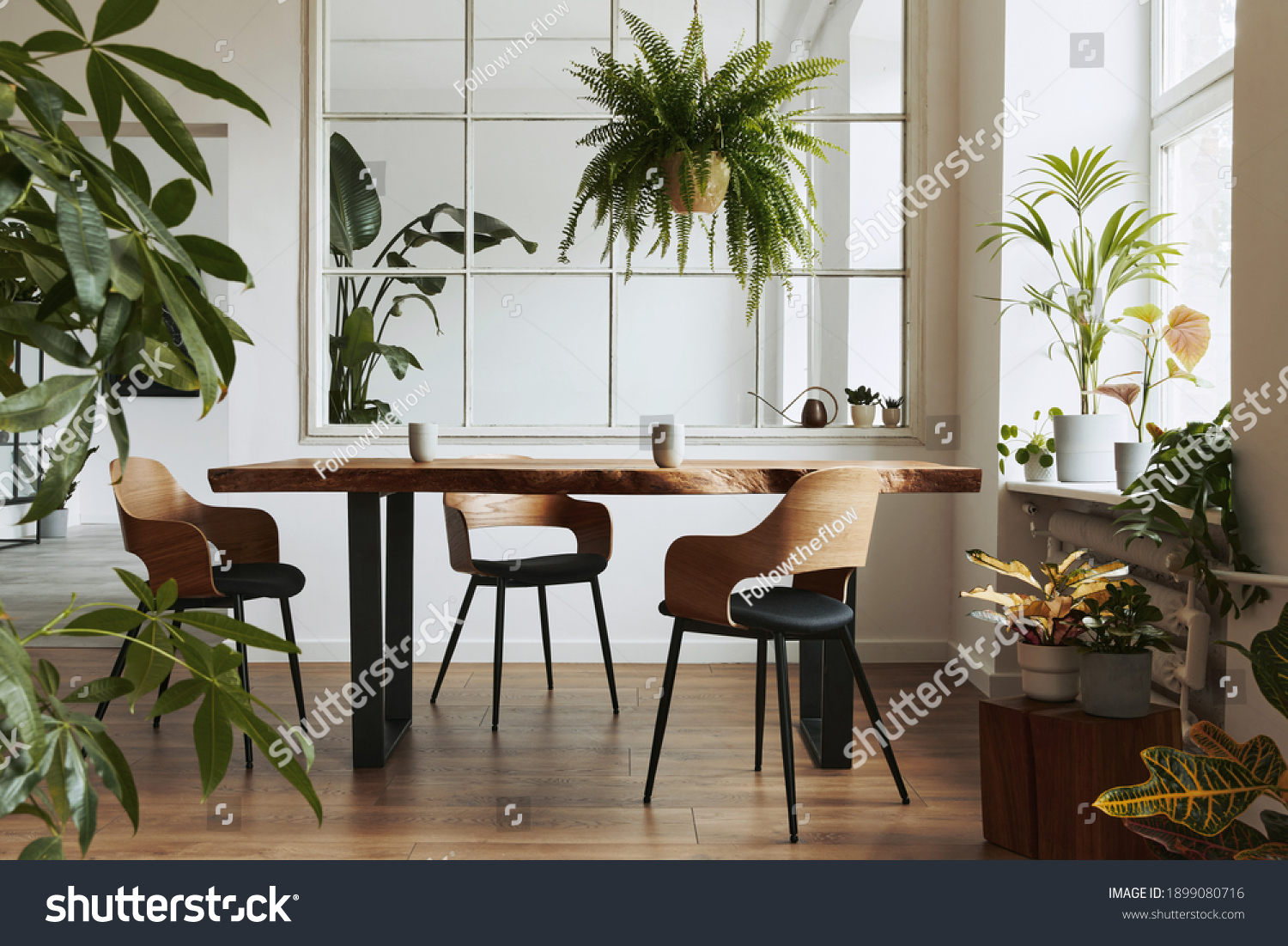 Stylish and botany interior of dining room with design craft wooden table, chairs, a lof of plants, big window, poster map and elegant accessories in modern home decor. Template. #1899080716