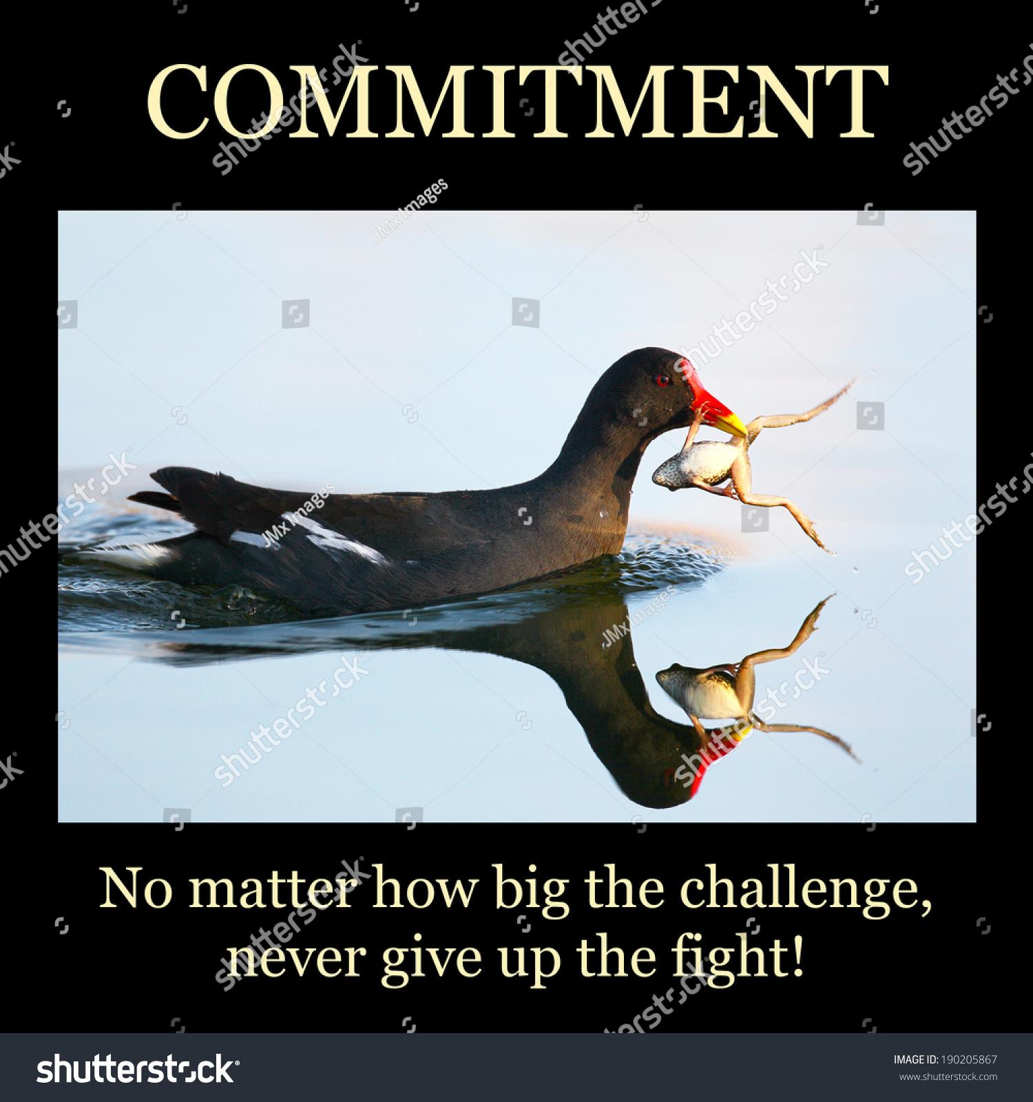 inspirational poster commitment frog fighting back stock. Black Bedroom Furniture Sets. Home Design Ideas