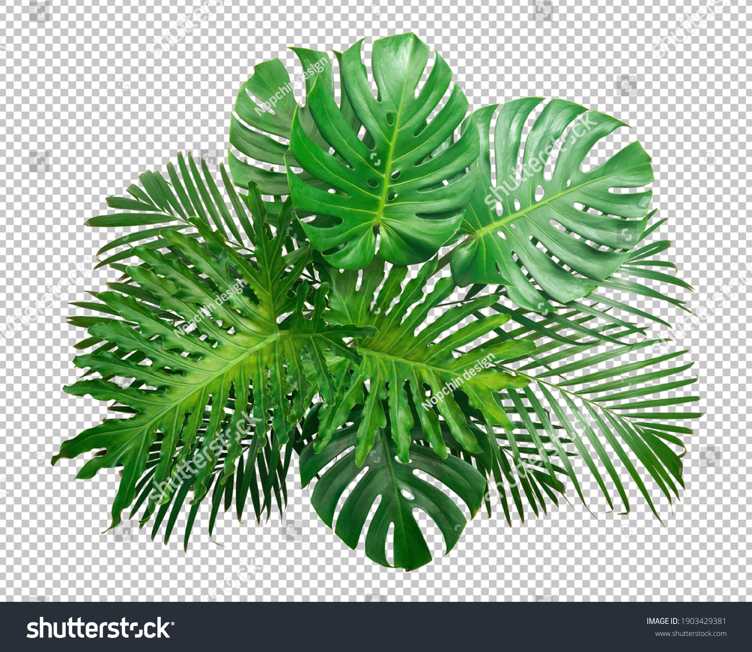 Bush Green Monstera leaf isolated transparency white background.Tropical leaves object clipping path #1903429381