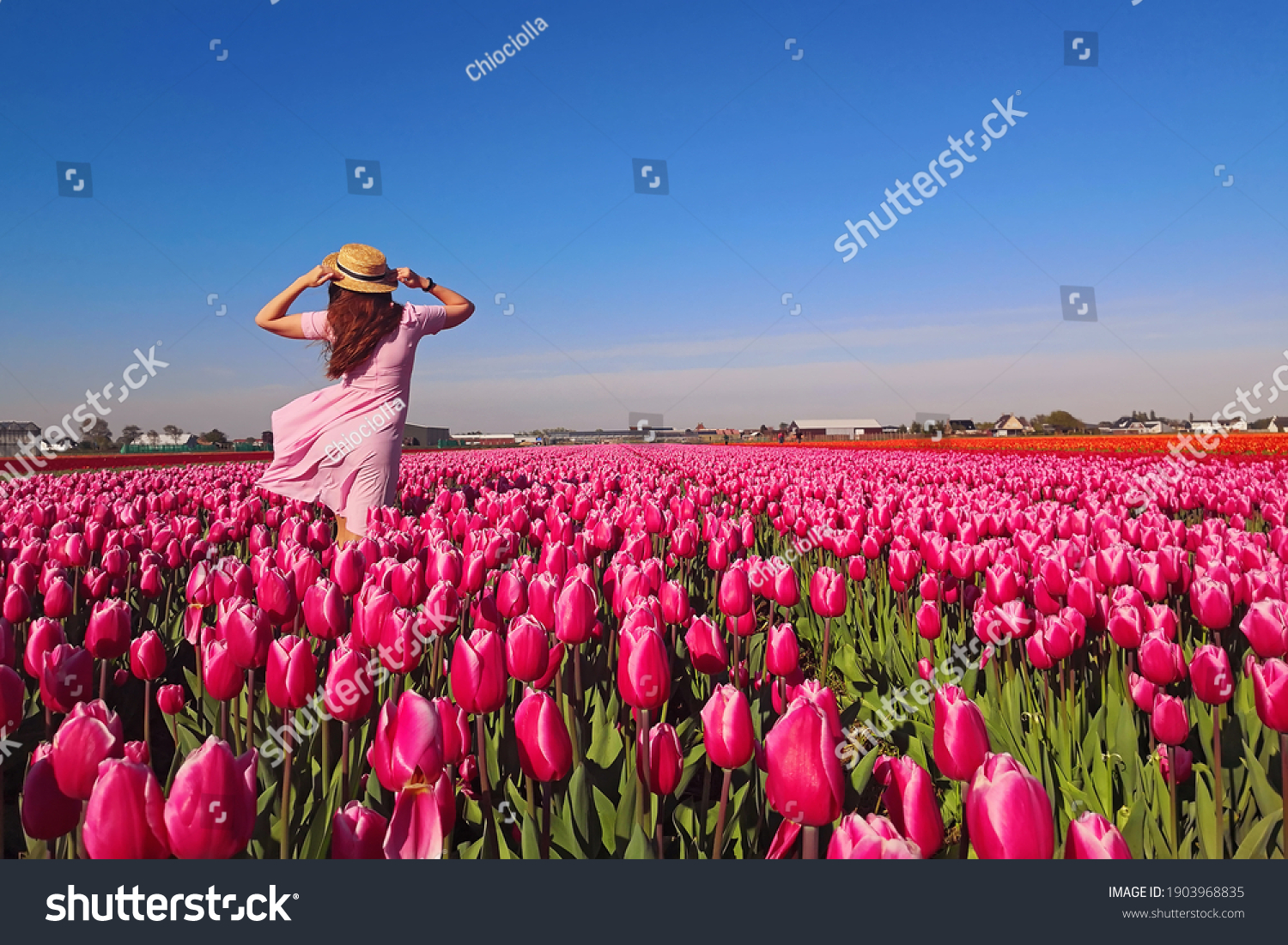 Young woman tourist in pink dress and straw hat standing in blooming tulip field. Spring time #1903968835