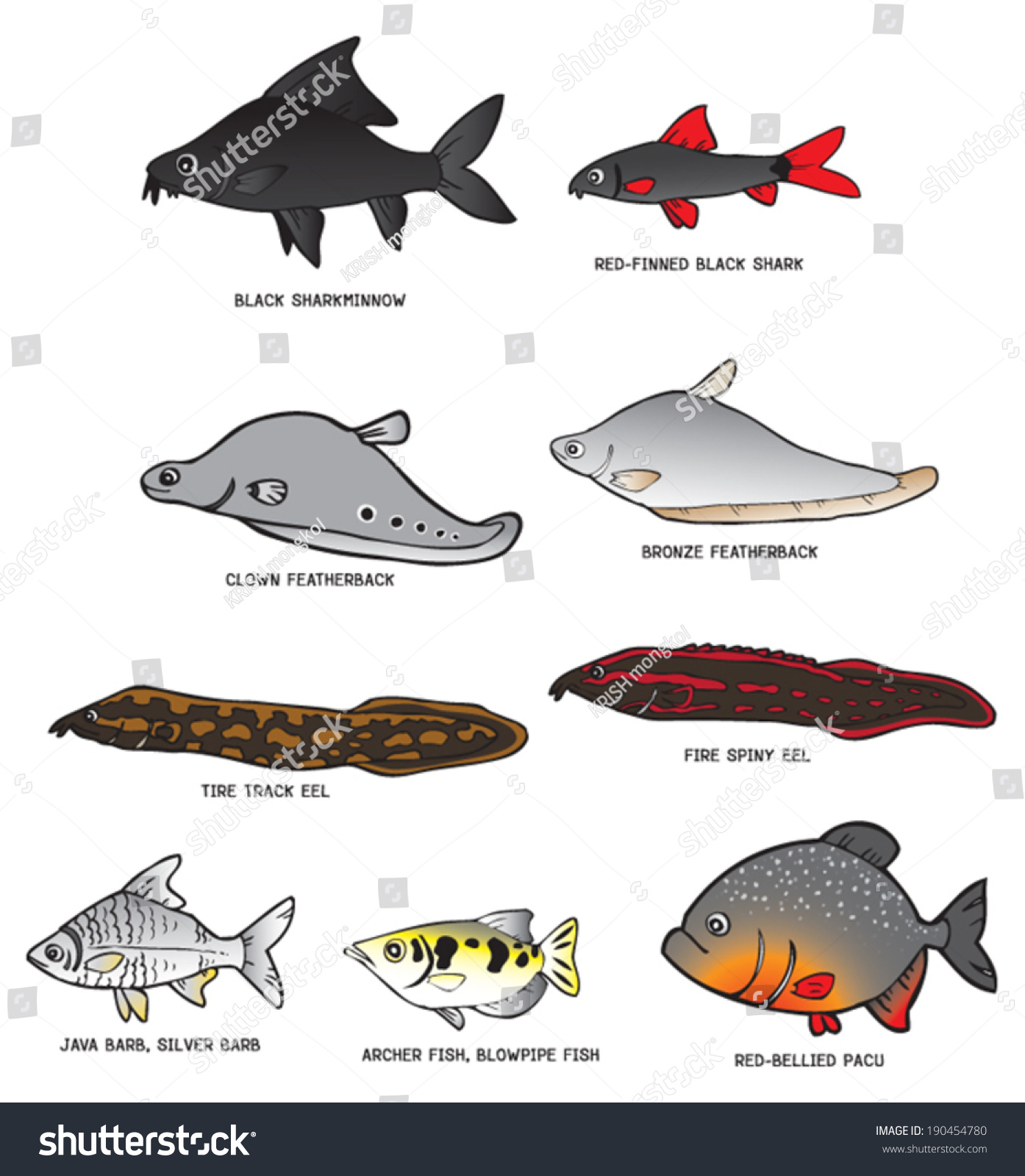 Freshwater fish in malaysia - Collection Of Fresh Water Fish From Southeast Asia And All Of Them Can Be Found In