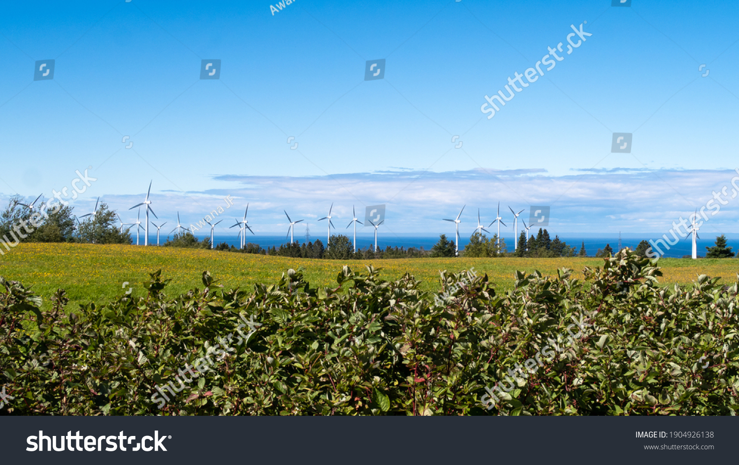 stock-photo-cap-chat-canada-september-vi
