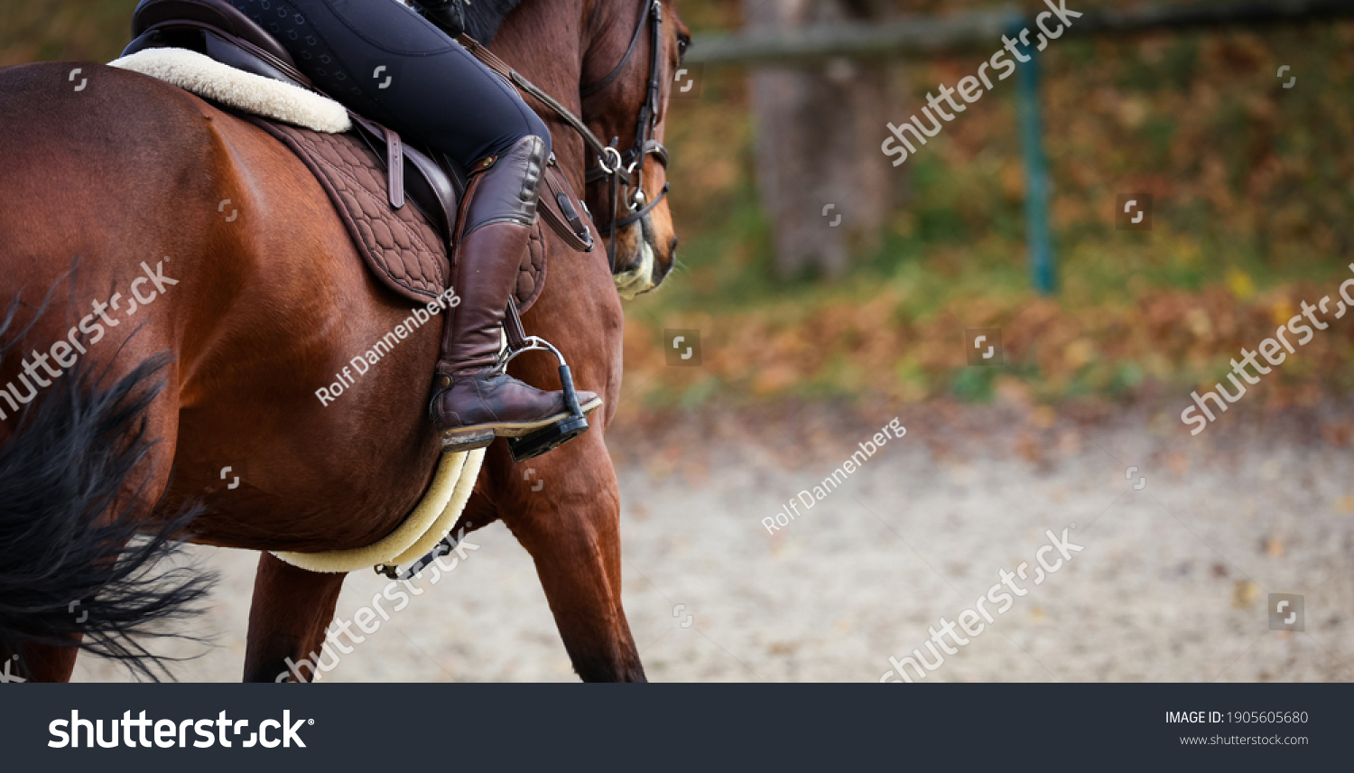 Horse with rider close up of riding boot in stirrup, focus on the boot photographed from behind. #1905605680