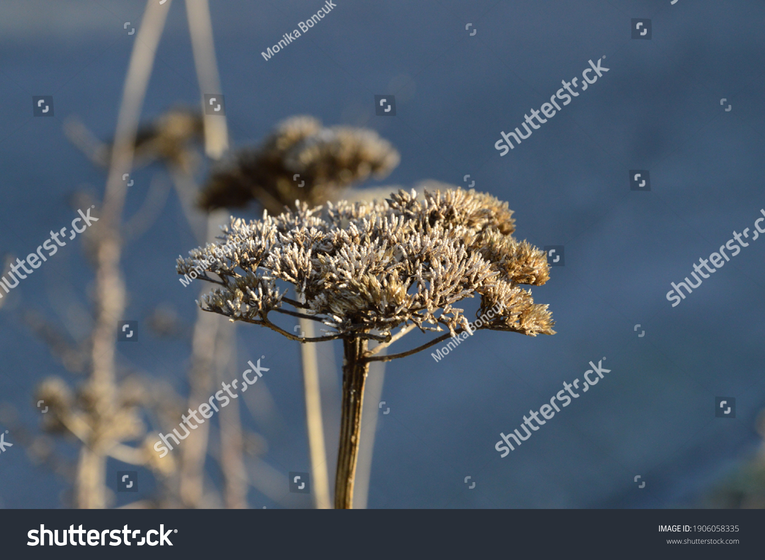 stock-photo-a-frozen-blossom-on-winter-m