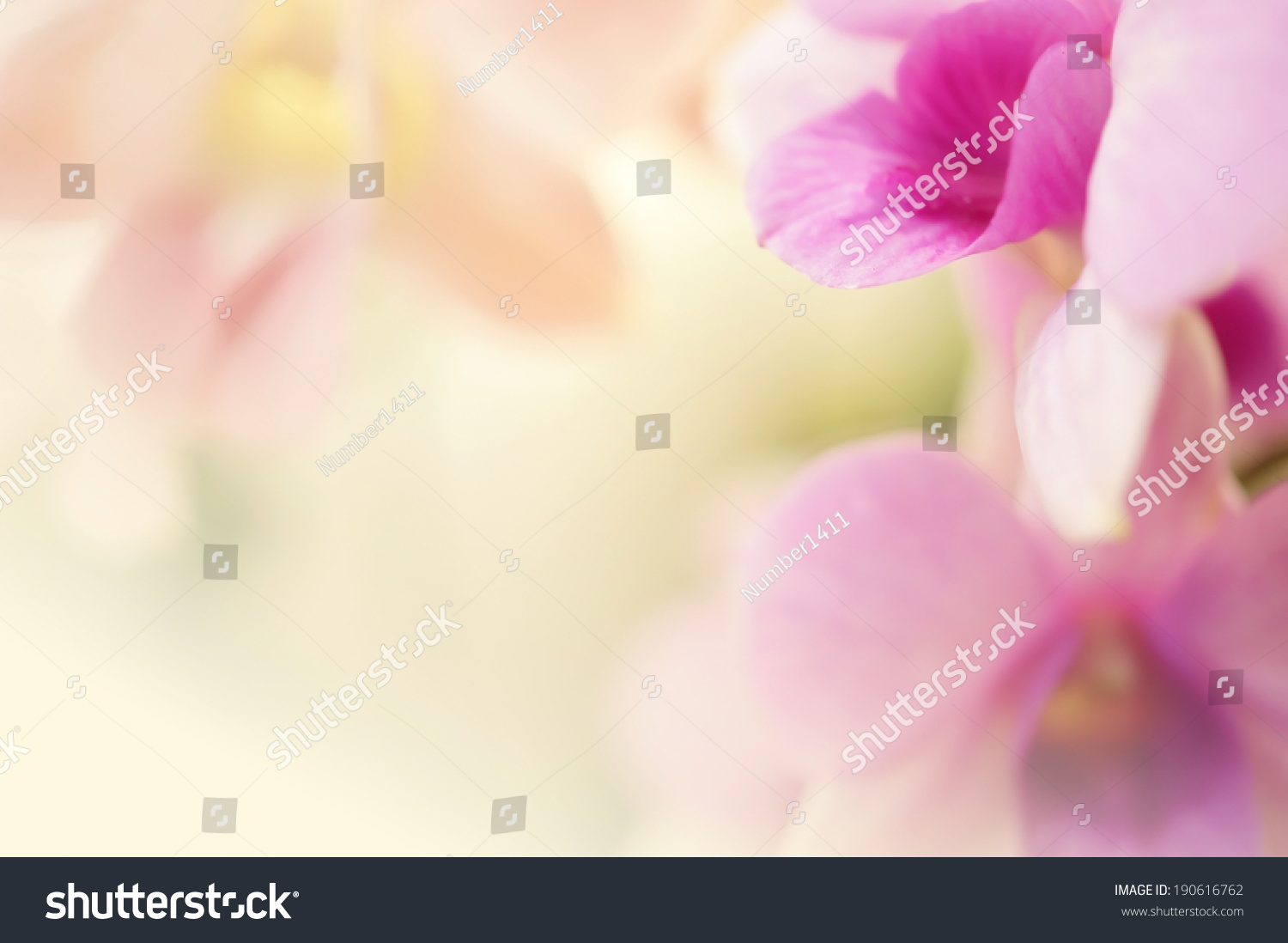 Sweet Color Orchid Soft Color Blur Stock Photo 190616762 ...