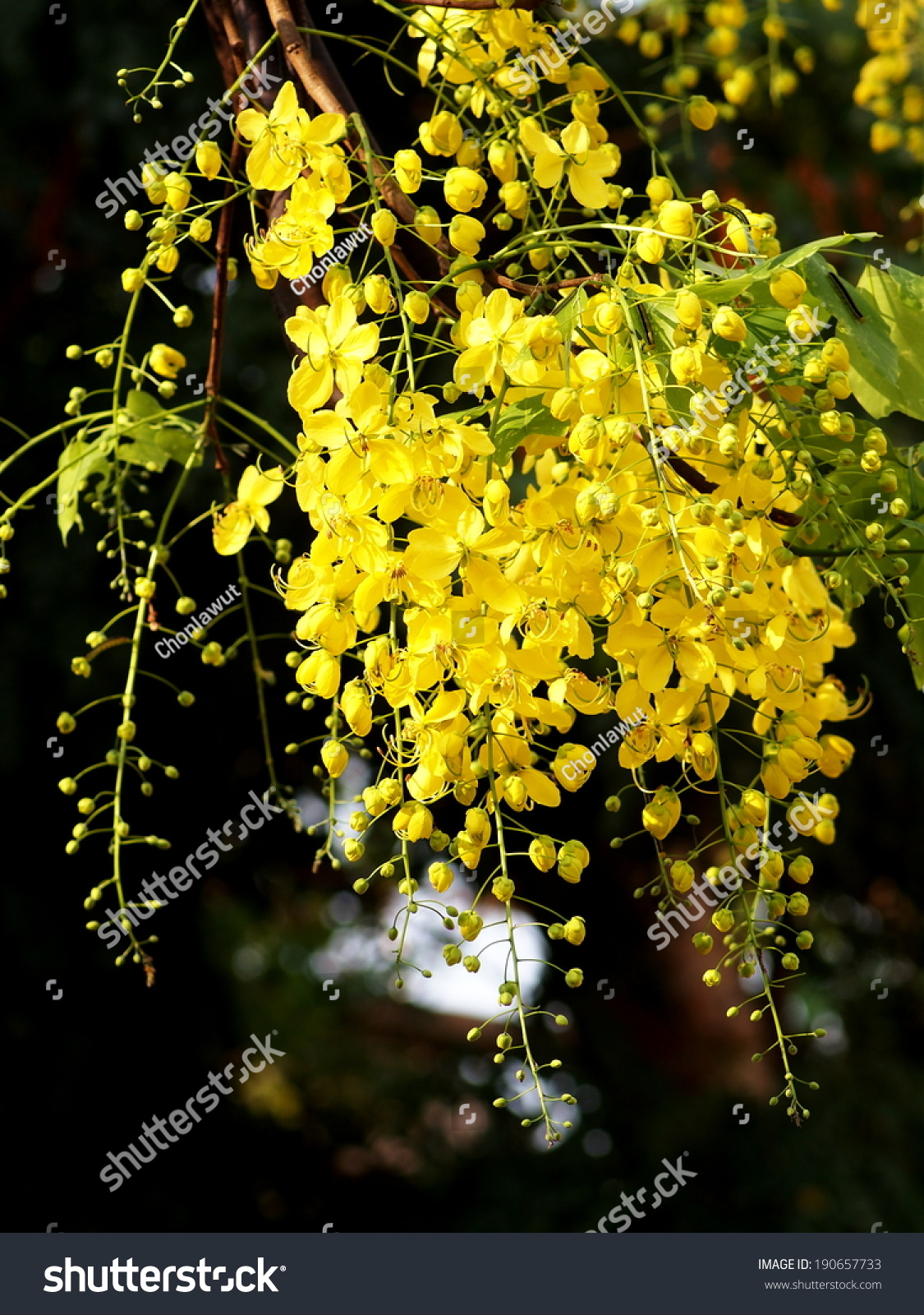 Group Little Tiny Yellow Flowers Golden Stock Photo Edit Now