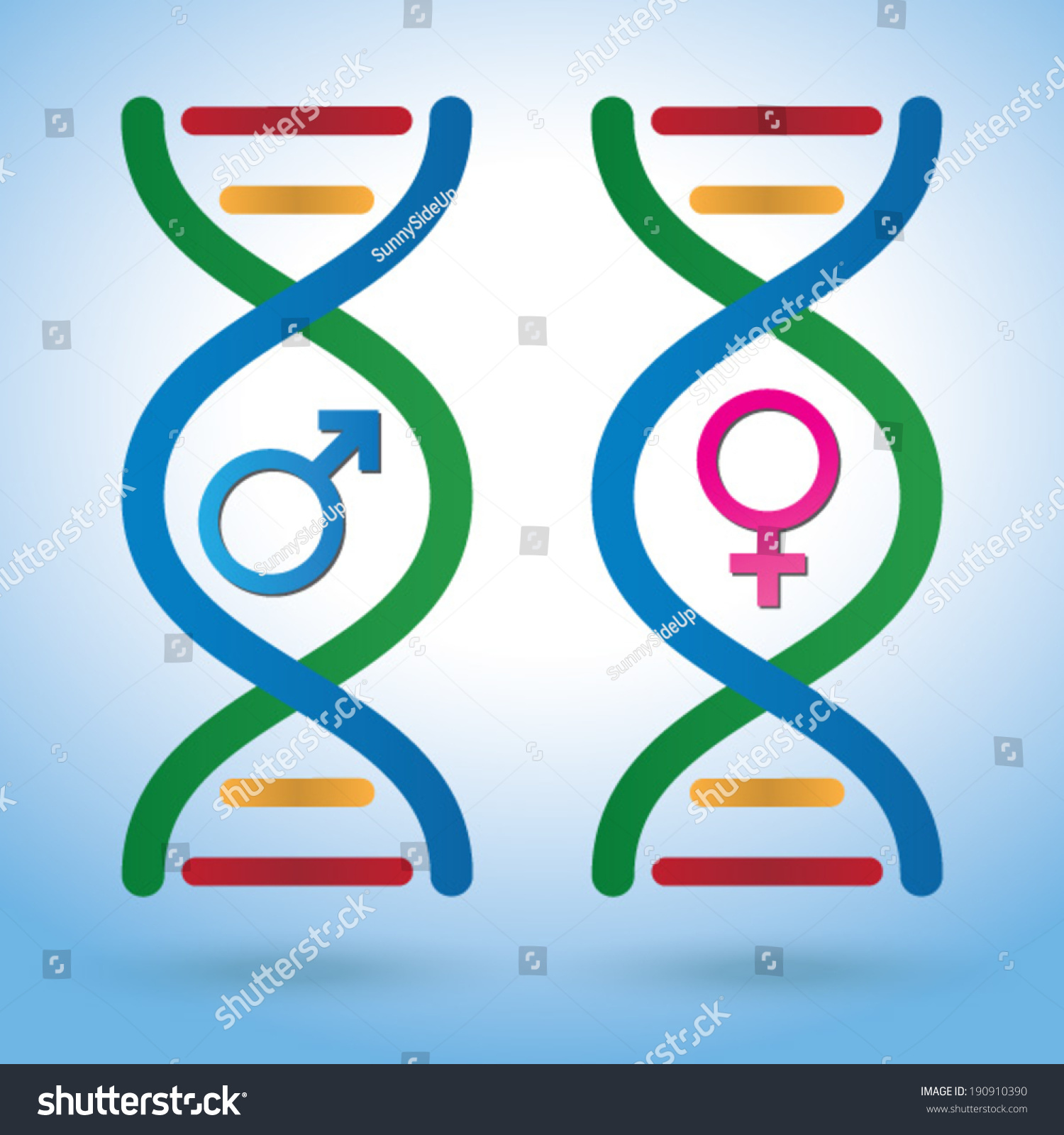 Male Female Sex Symbols Dna Depicting Stock Vector Royalty Free