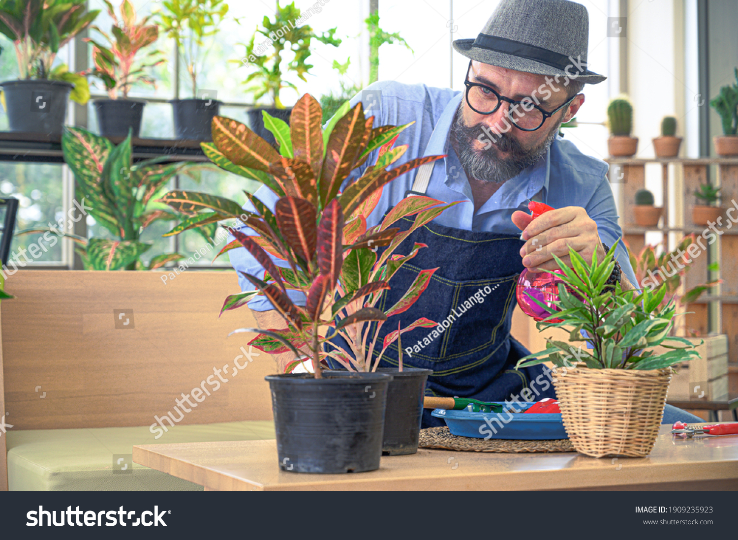 Relax hobbies lifestyle of Caucasian male  wearing apron spray water to growing a plants in the room at home. People hobby activity. #1909235923