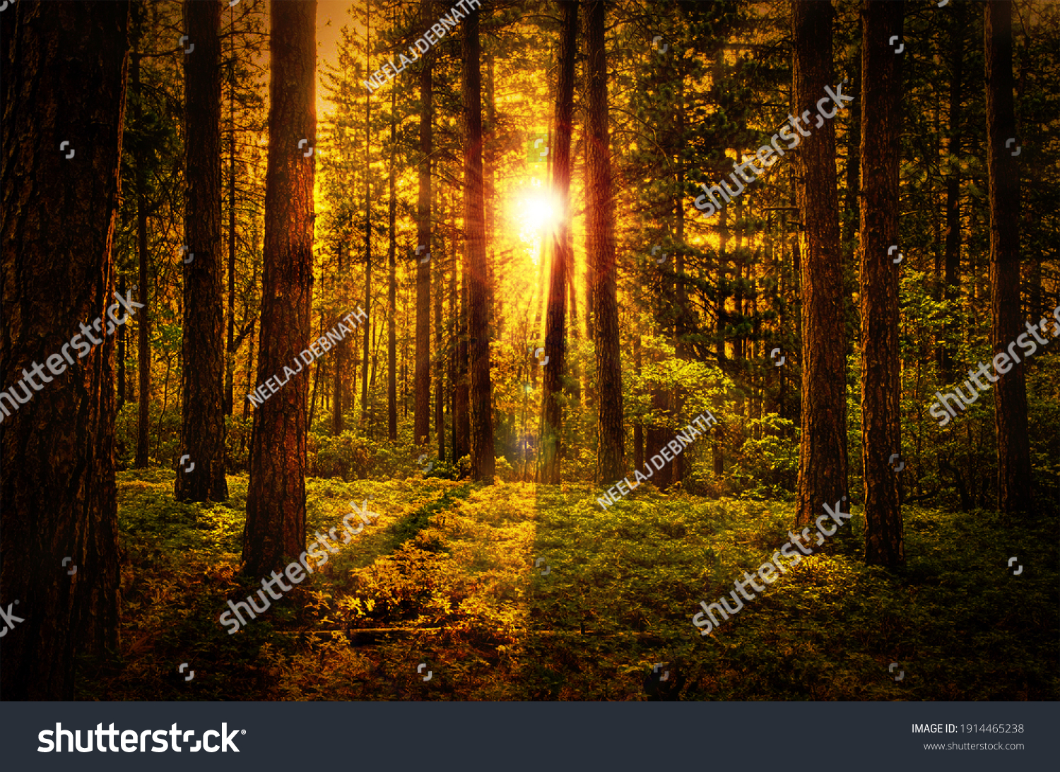 Beautiful Natural Forest Dawn Background #1914465238
