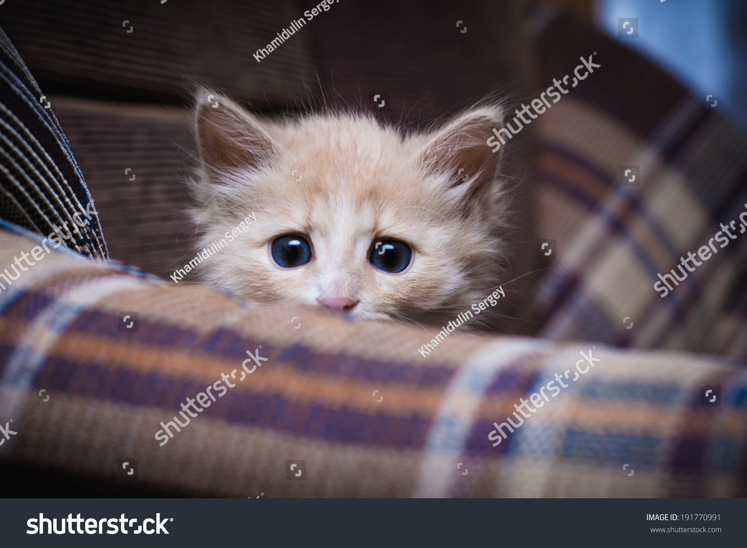 Scared Kitten Hiding Home Stock Photo 191770991 - ShutterstockScared Kitten Hiding