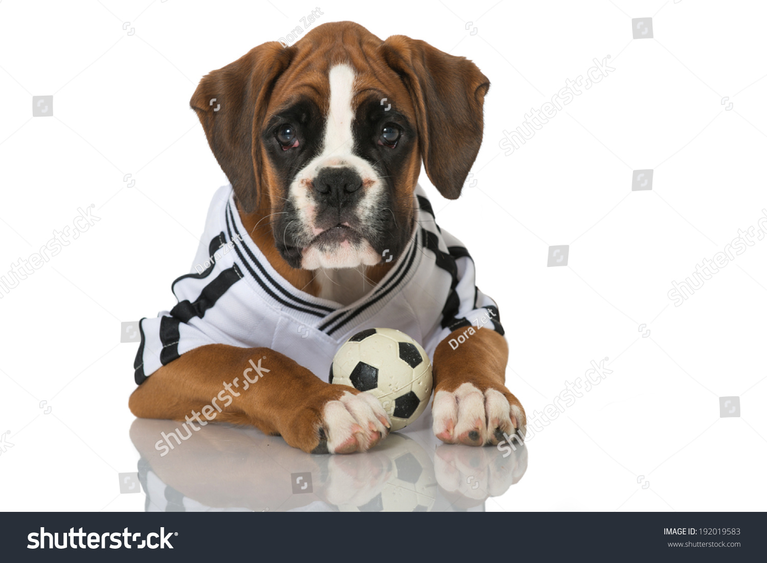 Puppy Football Jersey Isolated On White Stock Photo (Edit Now ... a477aa0b6