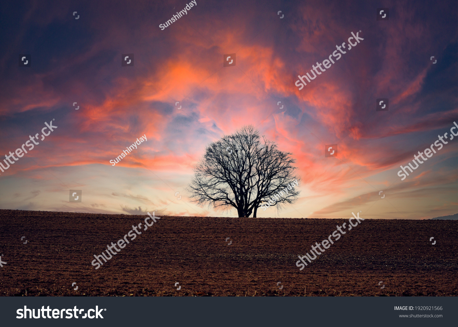 Single tree in front of a dramatic illuminated sky
