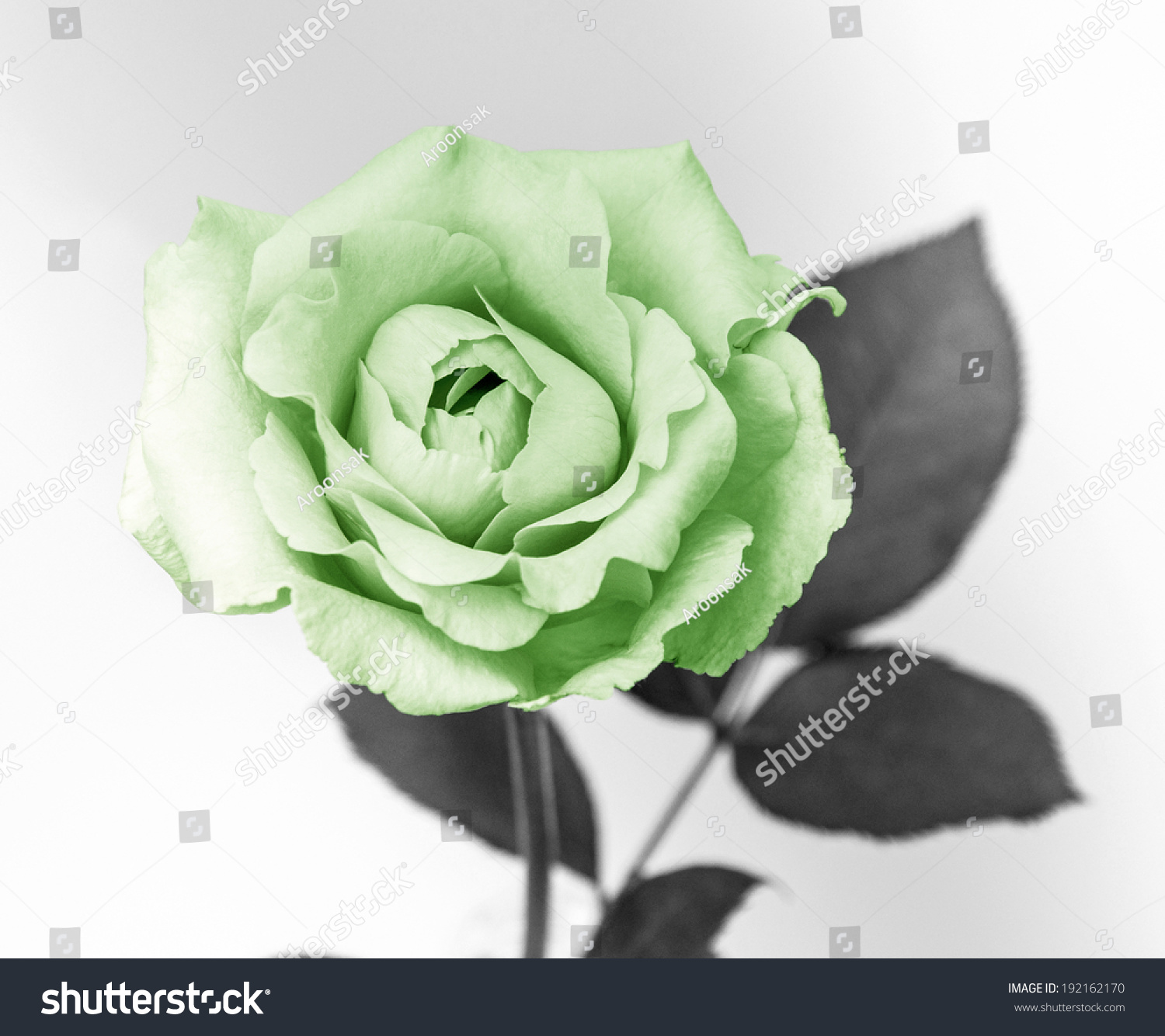 Flower Design On Black Vintage Beautiful Stock Photo (Royalty Free ...