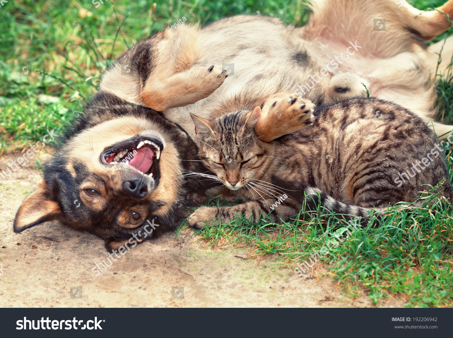 dog cat playing outdoor dog lying stock photo 192206942 shutterstock. Black Bedroom Furniture Sets. Home Design Ideas