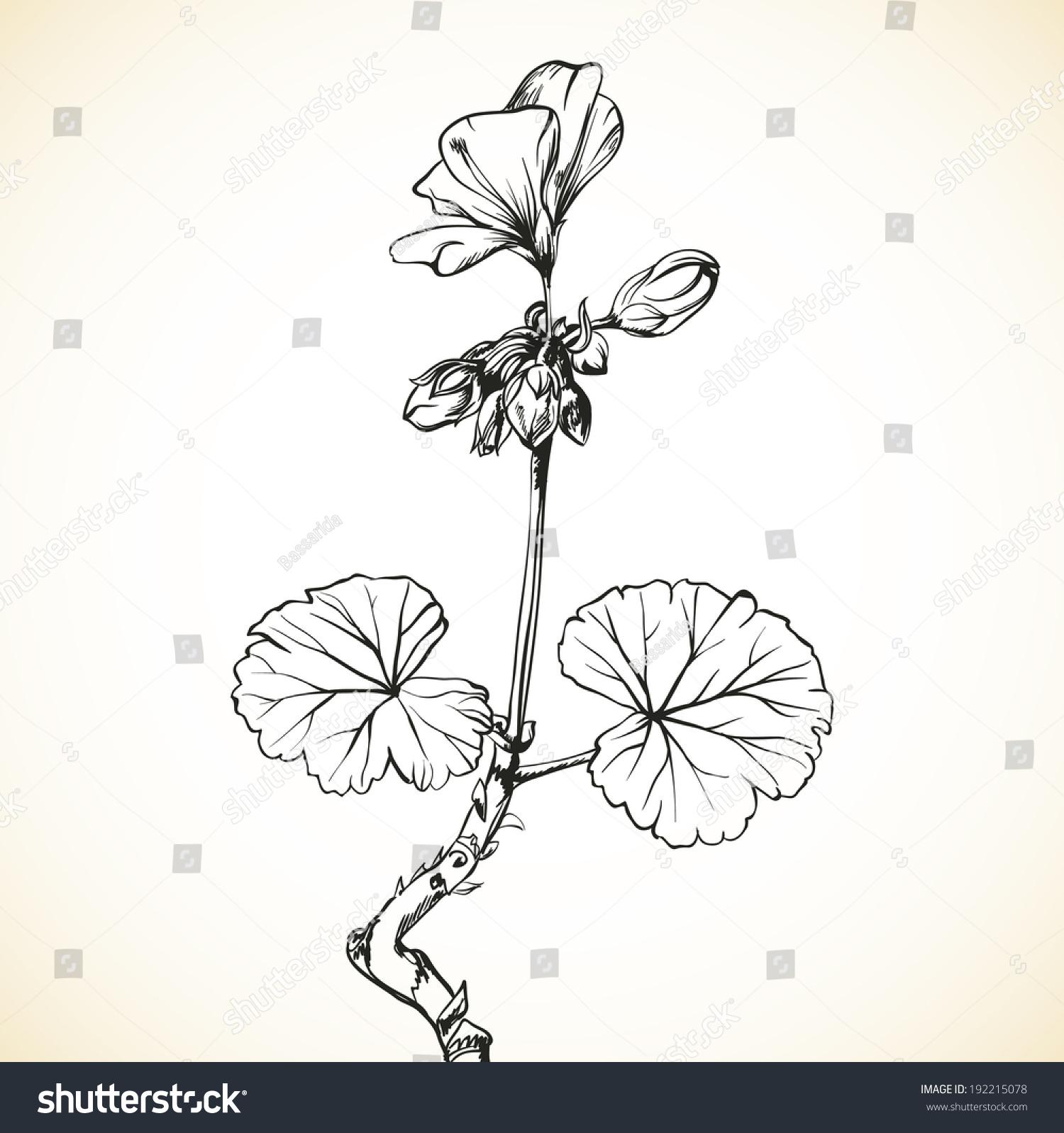 artistic hand drawn geranium flower