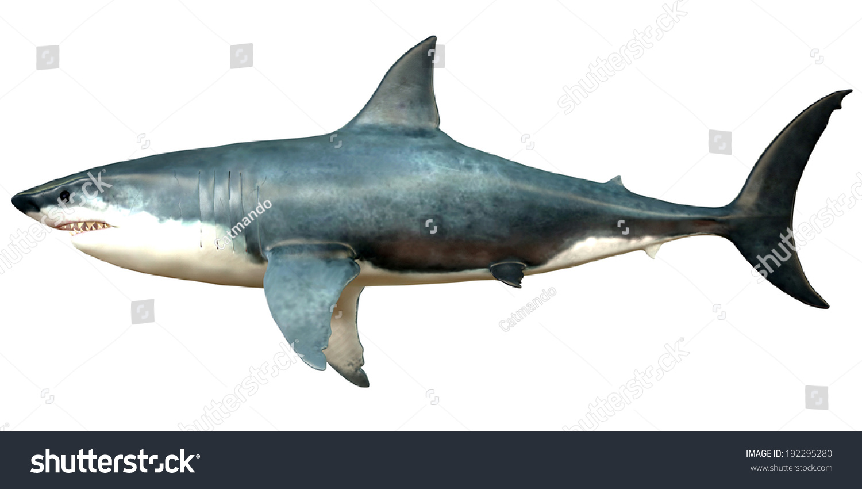 great white shark human teeth