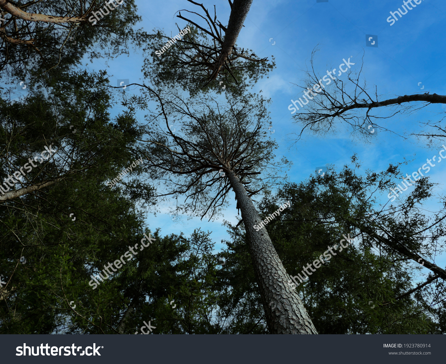 stock-photo-looking-up-to-the-sky-in-a-f
